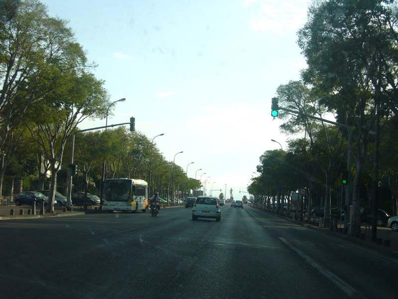 avenue du Prado.jpg