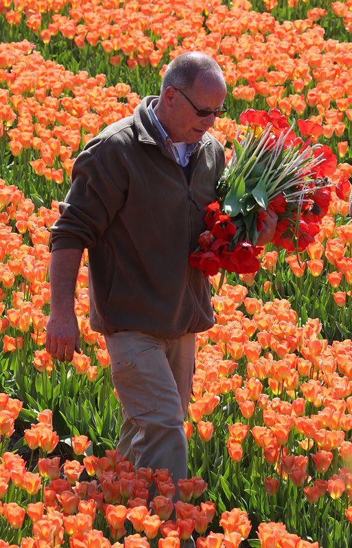 tulips-7-1men.jpg