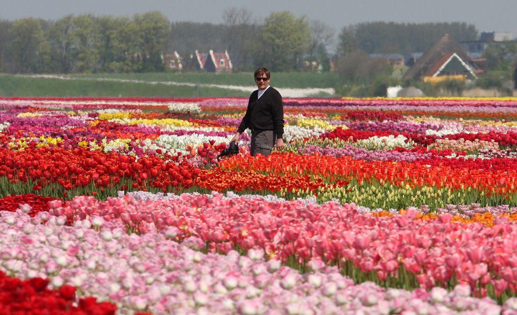 tulips-15-yura.jpg