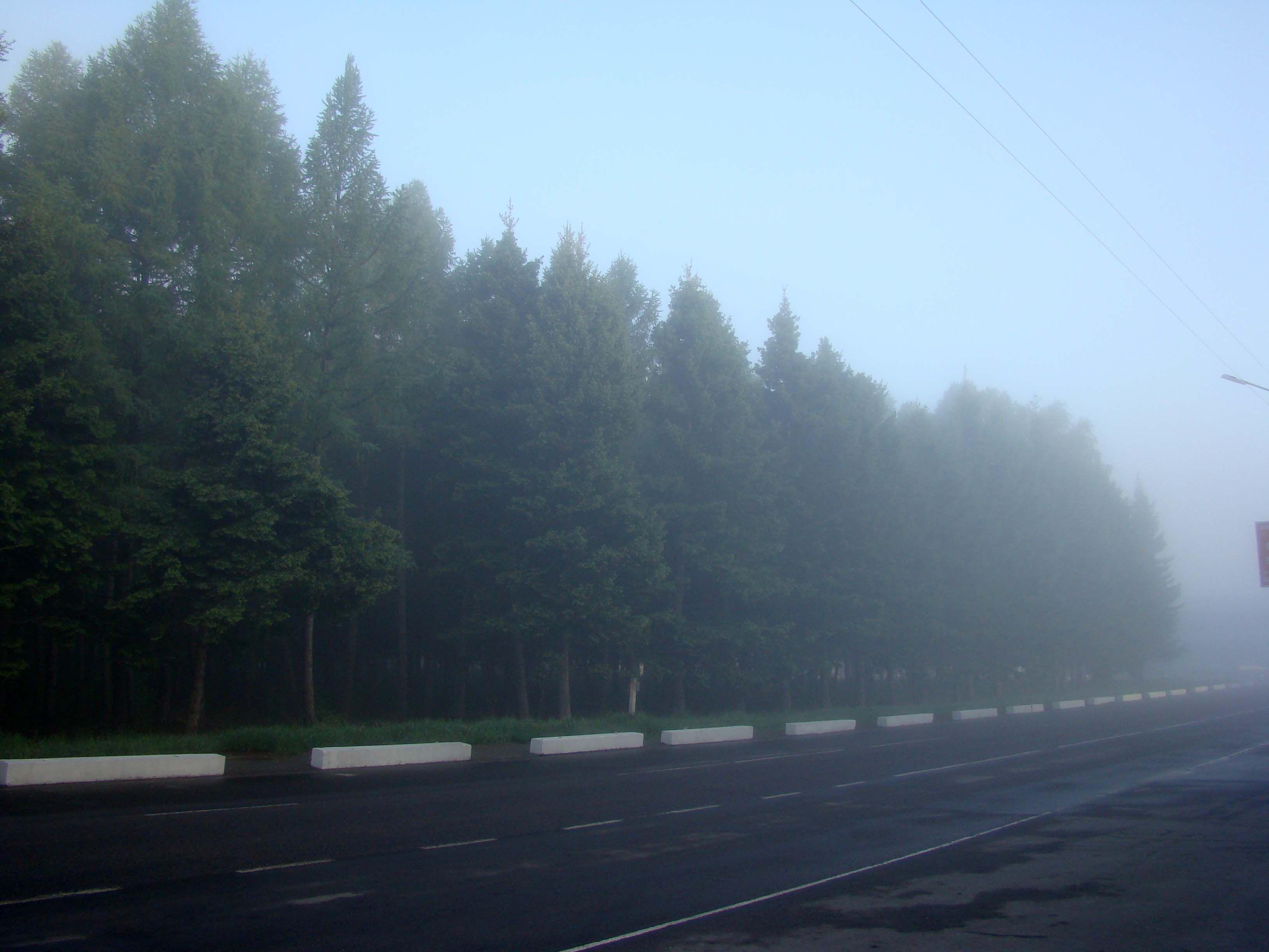 туман порт.jpg