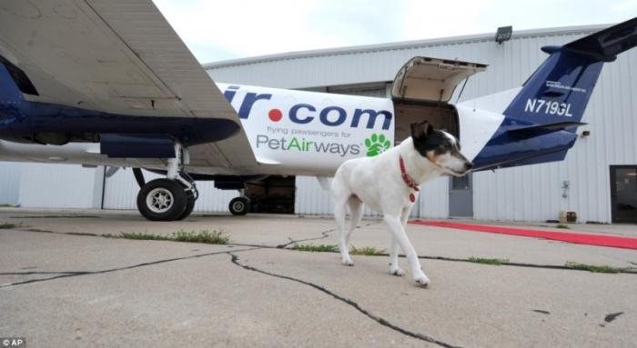 Dog_plane_03.jpg