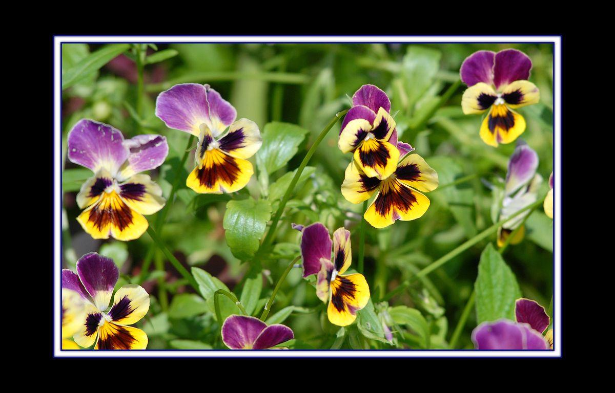 цветы_01.jpg